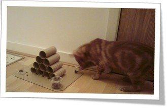 cat-feeder1