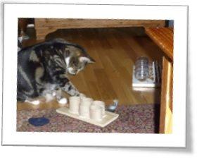 cat-feeder2