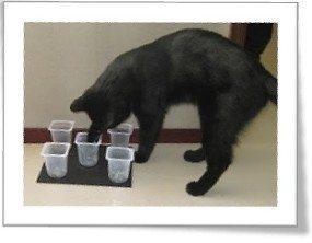 cat-feeder4
