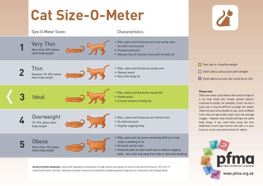 cat-size-o-meter