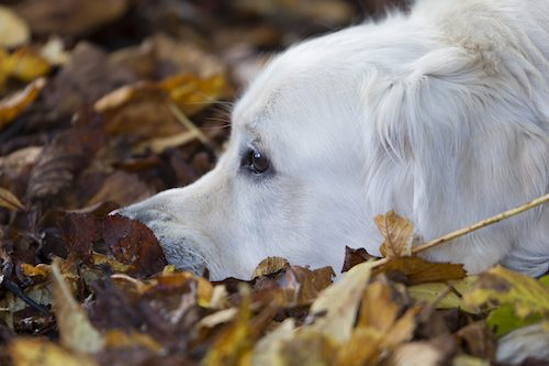 Autumn leaves fall, and bonfire night is around the corner...