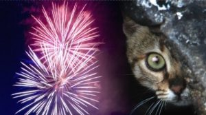 fireworkscat