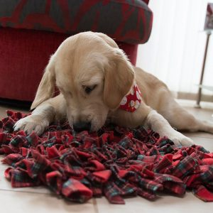 nellie-with-snuffle-mat