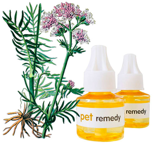 Pet Remedy Stress Release 1